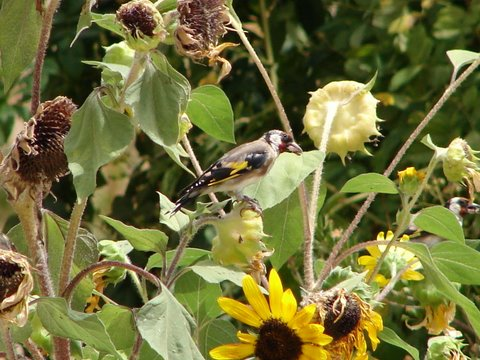 how to keep birds from eating sunflower seeds
