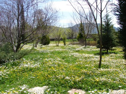 carpet of wild flowers in the orchard in April